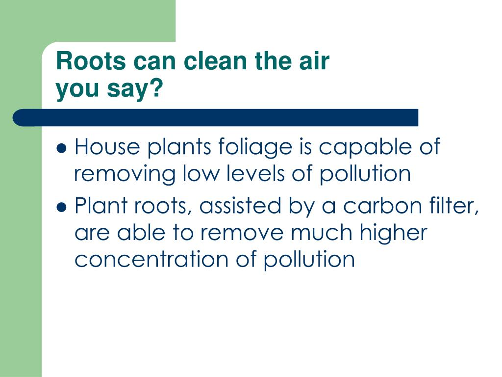 Roots can clean the air