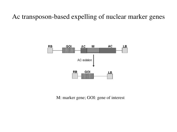 Ac transposon-based expelling of nuclear marker genes