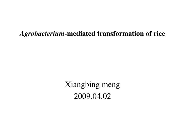 Agrobacterium mediated transformation of rice