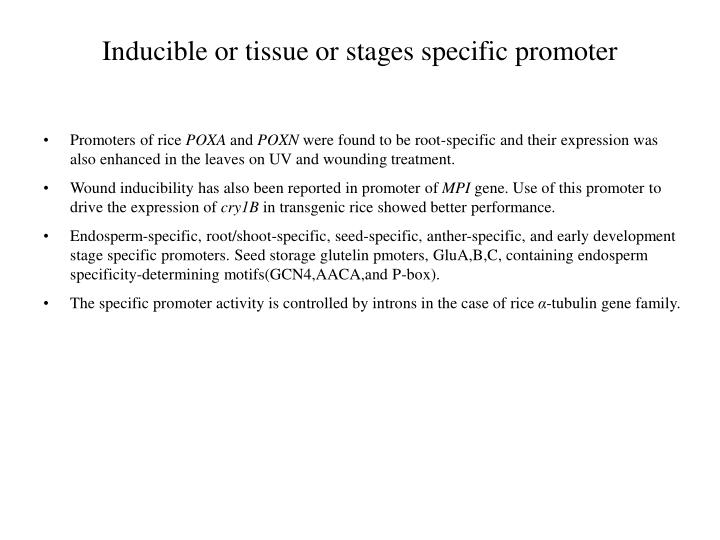 Inducible or tissue or stages specific promoter