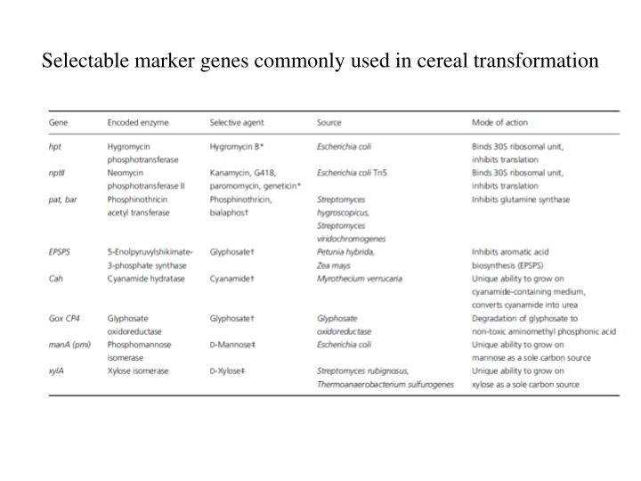 Selectable marker genes commonly used in cereal transformation