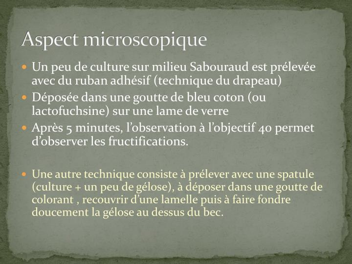 Aspect microscopique