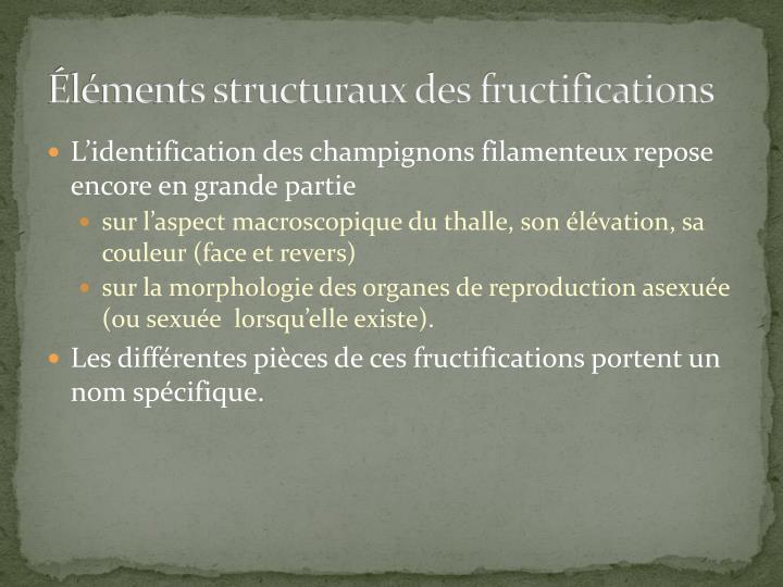 Éléments structuraux des fructifications