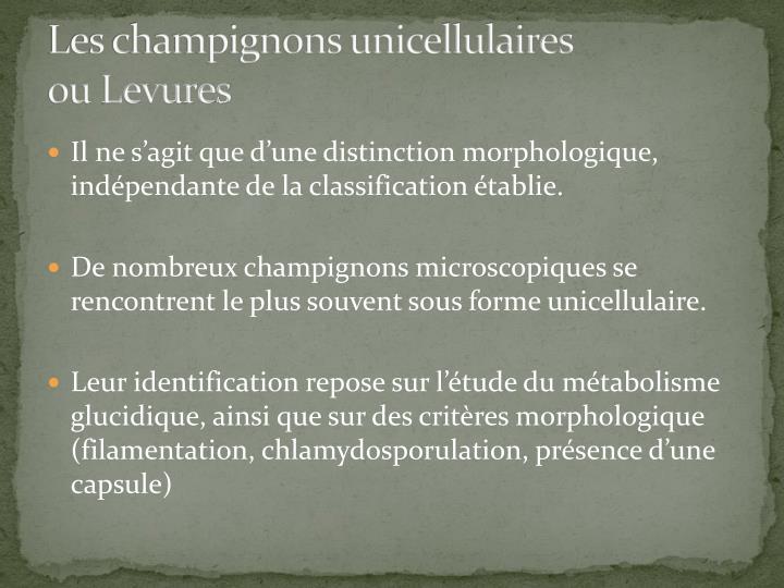Les champignons unicellulaires