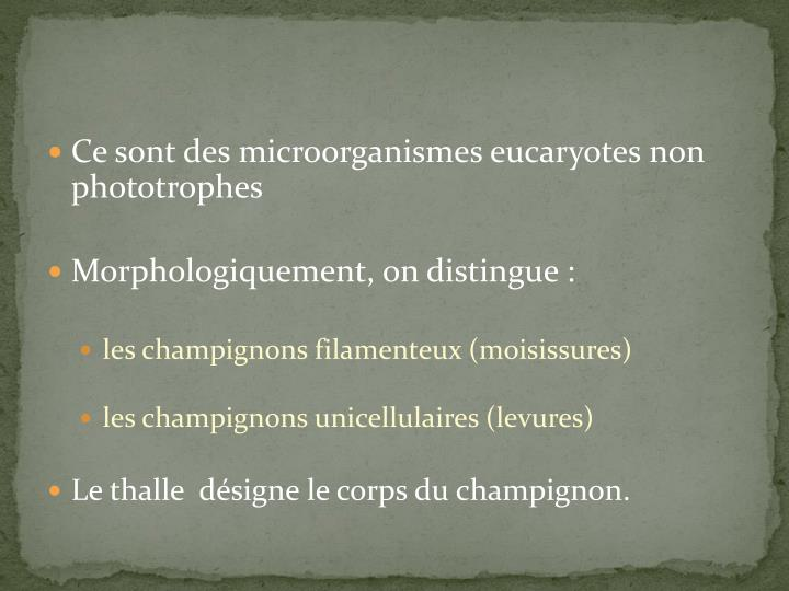 Ce sont des microorganismes eucaryotes non phototrophes