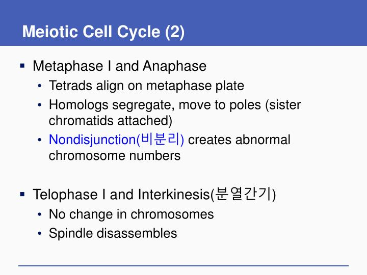 Meiotic Cell Cycle (2)