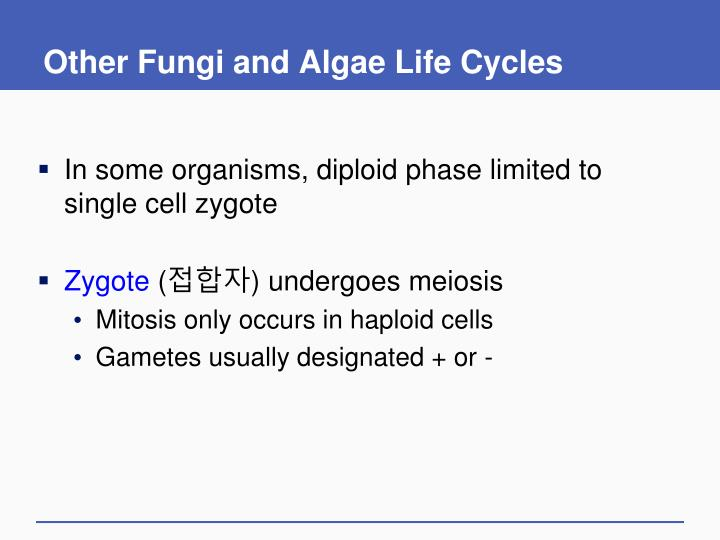 Other Fungi and Algae Life Cycles