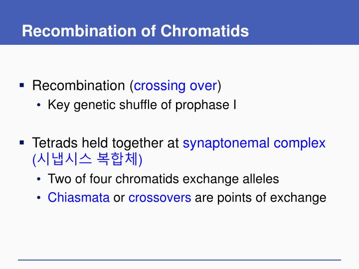 Recombination of Chromatids