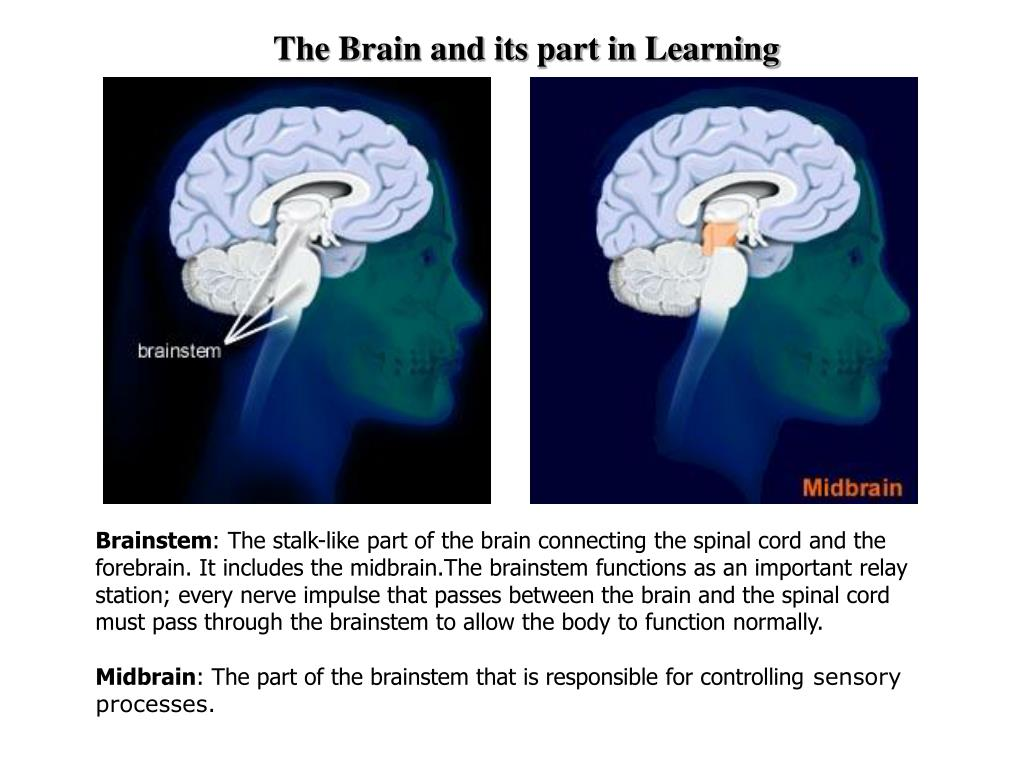 The Brain and its part in Learning