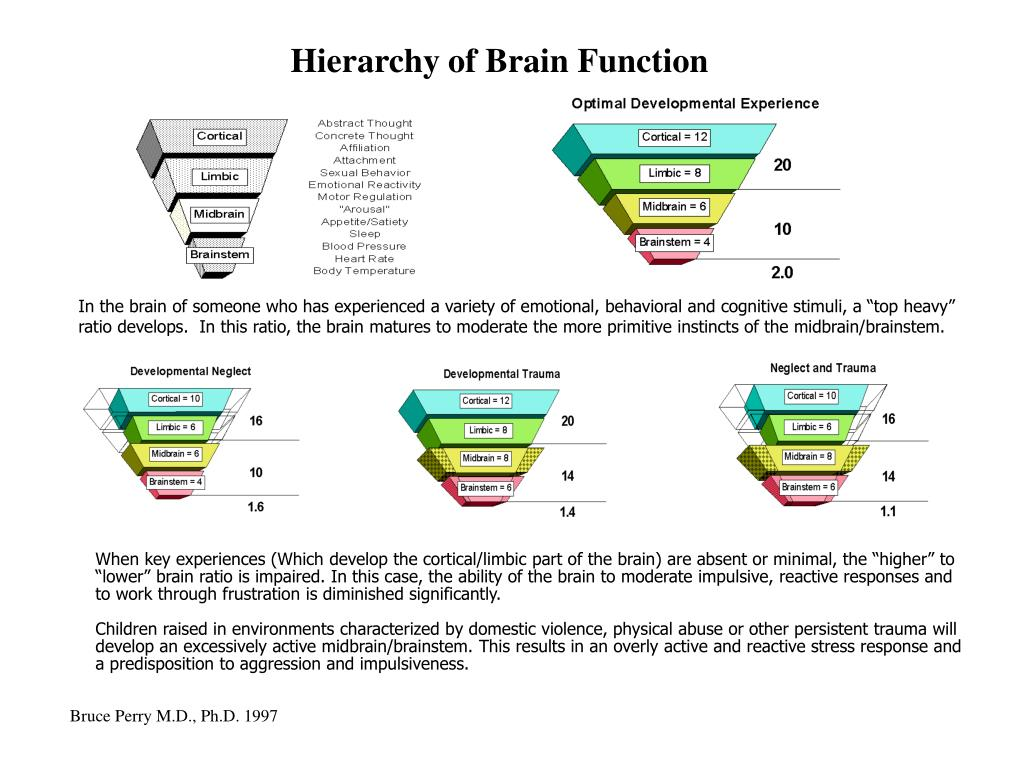 Hierarchy of Brain Function