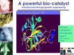 a powerful bio catalyst manufactured through genetic engeneering