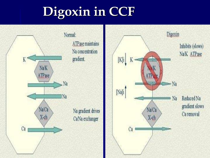 Digoxin in CCF