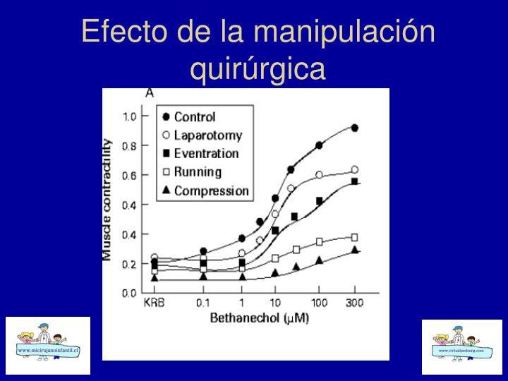 Efecto de la manipulación quirúrgica
