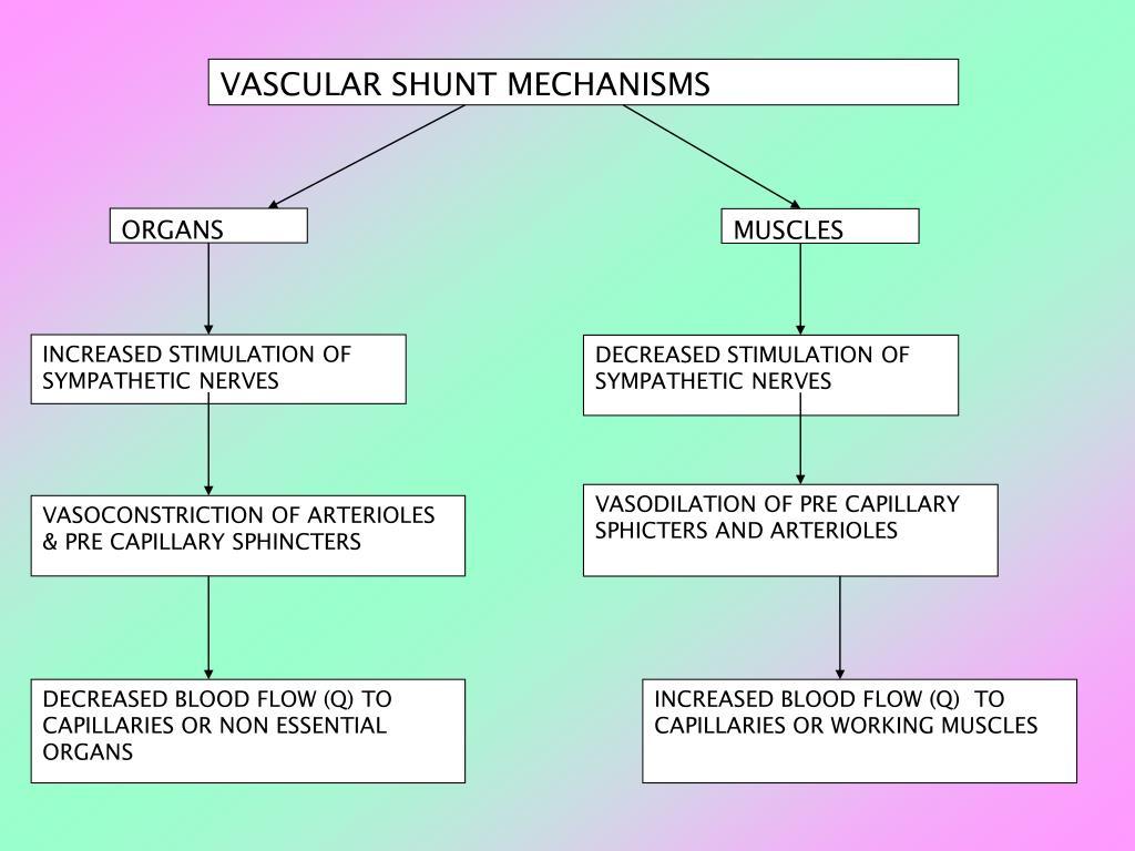 VASCULAR SHUNT MECHANISMS