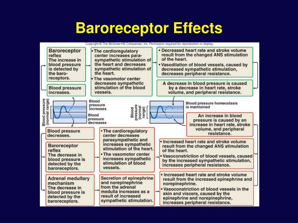 Baroreceptor Effects