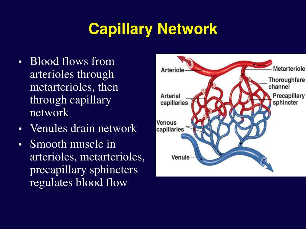 Capillary Network