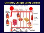 circulatory changes during exercise
