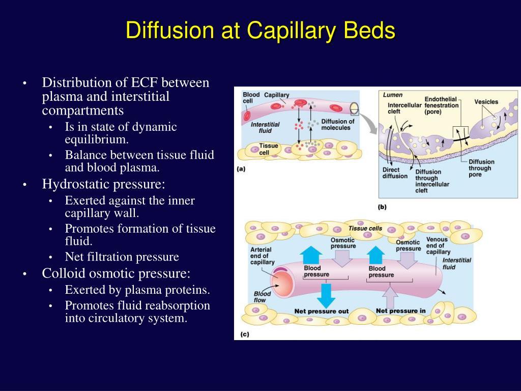 Diffusion at Capillary Beds