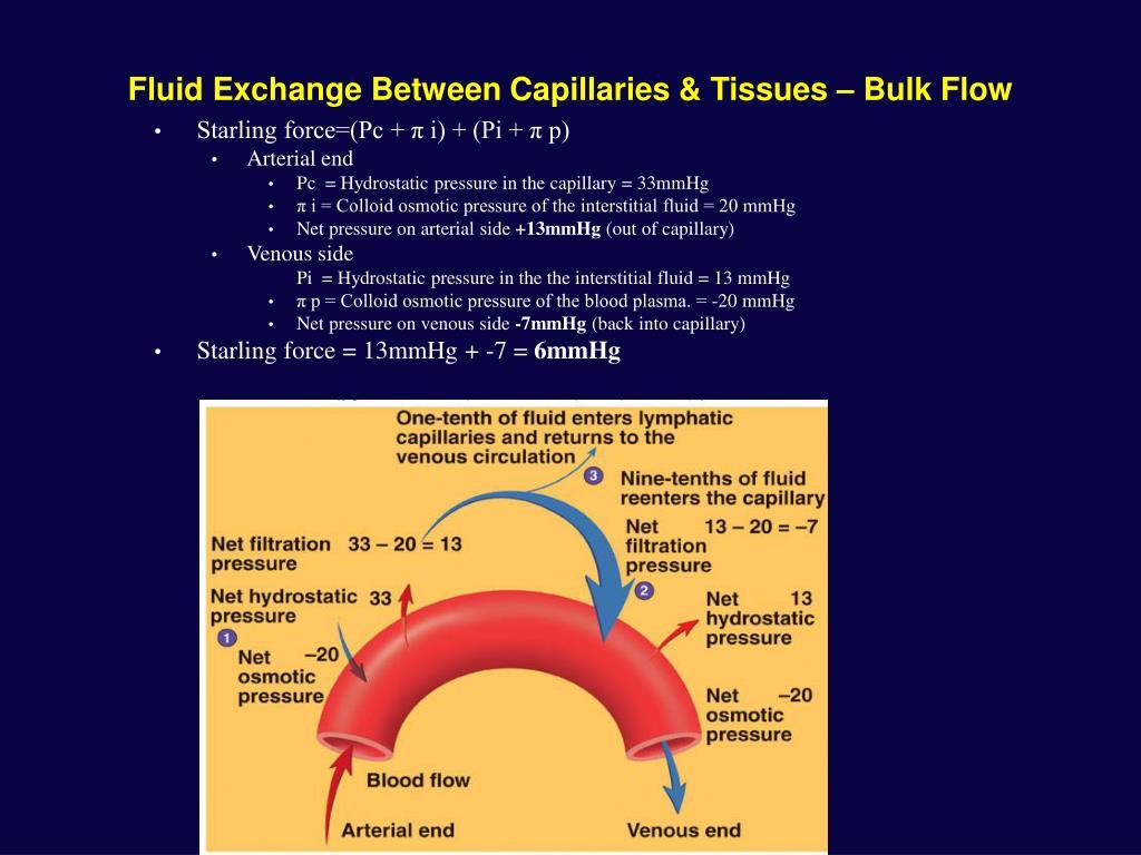 Fluid Exchange Between Capillaries & Tissues – Bulk Flow