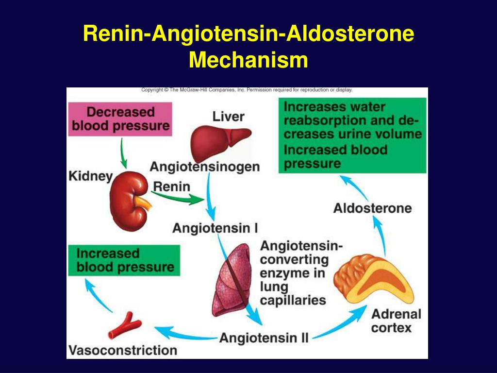 Renin-Angiotensin-Aldosterone