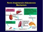 renin angiotensin aldosterone mechanism