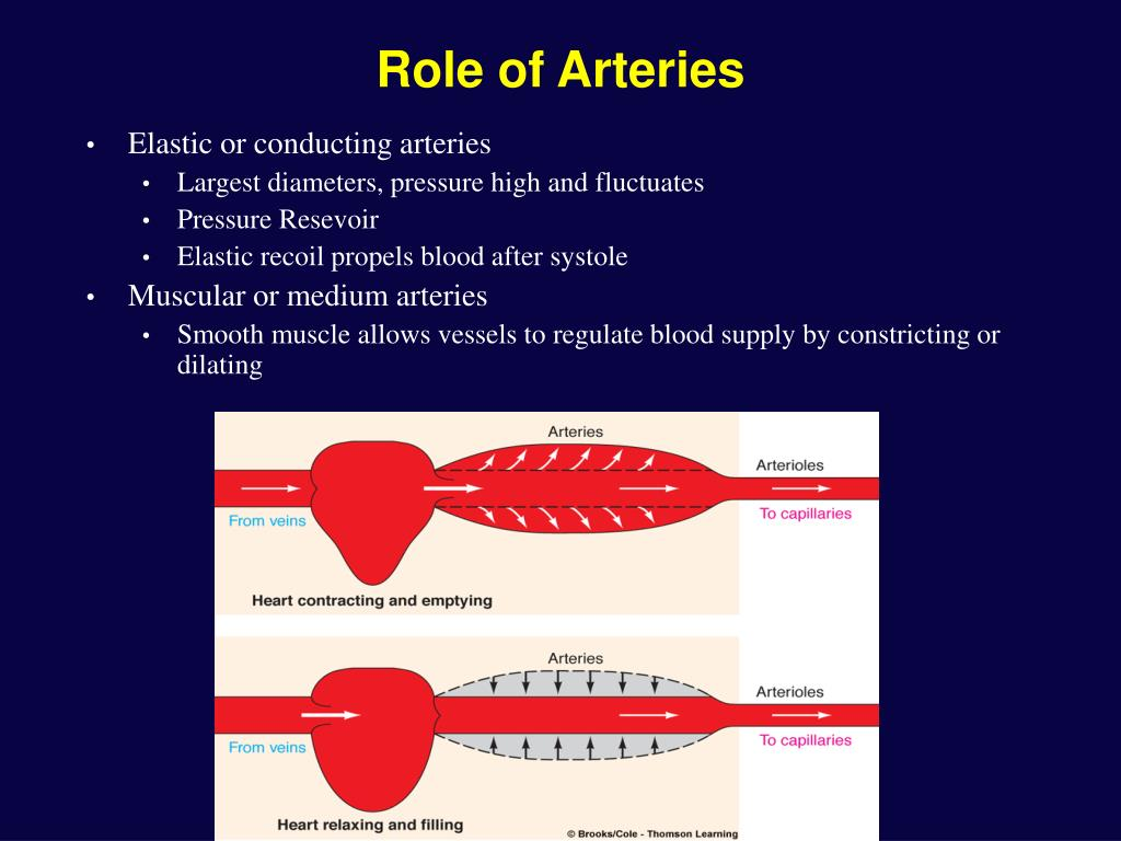 Role of Arteries