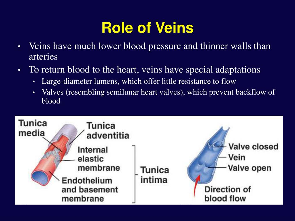 Role of Veins