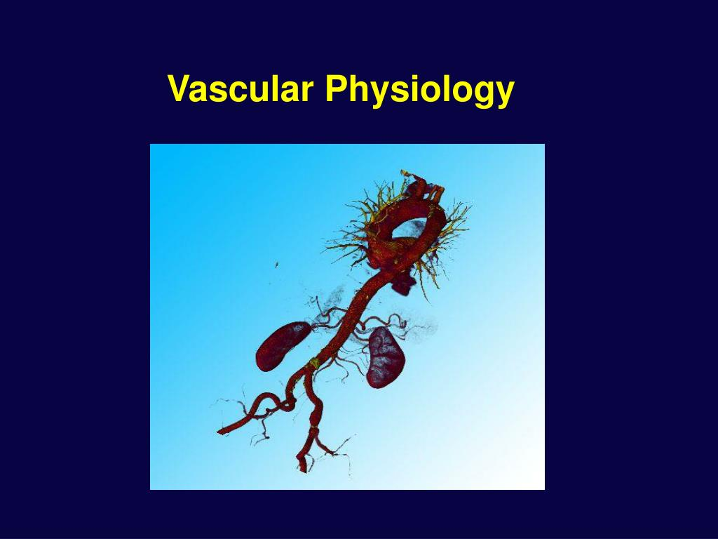 vascular physiology