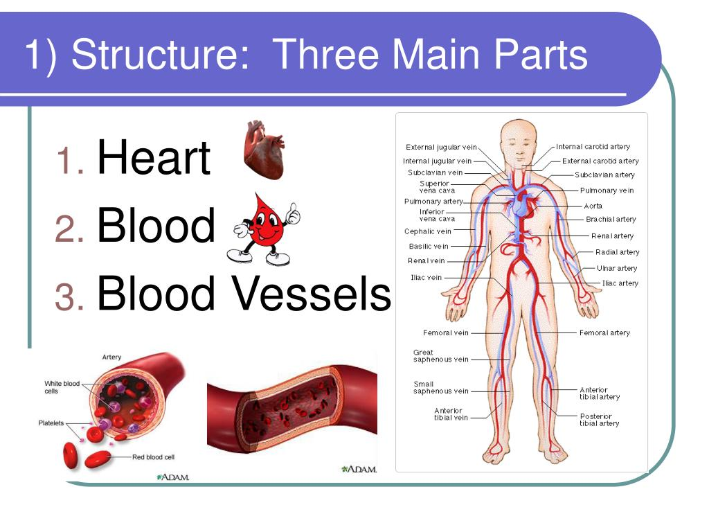 1) Structure:  Three Main Parts