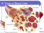 4 types of blood cells
