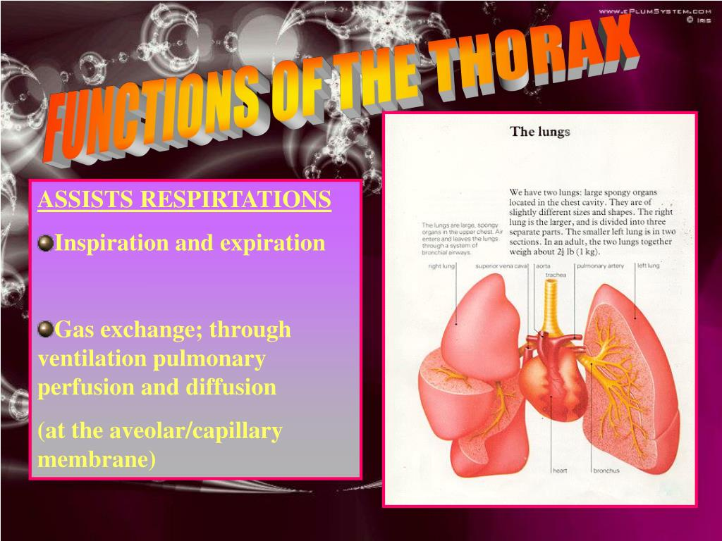 FUNCTIONS OF THE THORAX