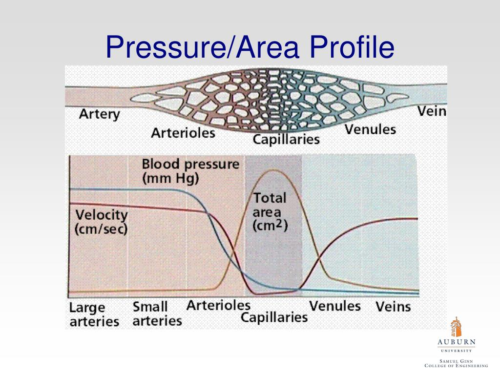 Pressure/Area Profile