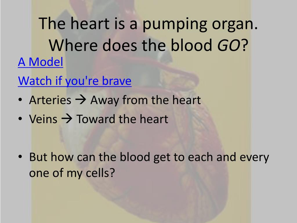 The heart is a pumping organ. Where does the blood