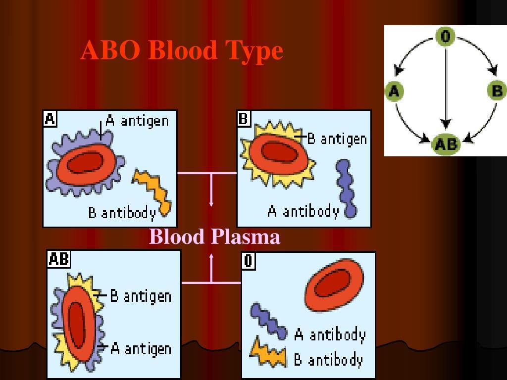 ABO Blood Type