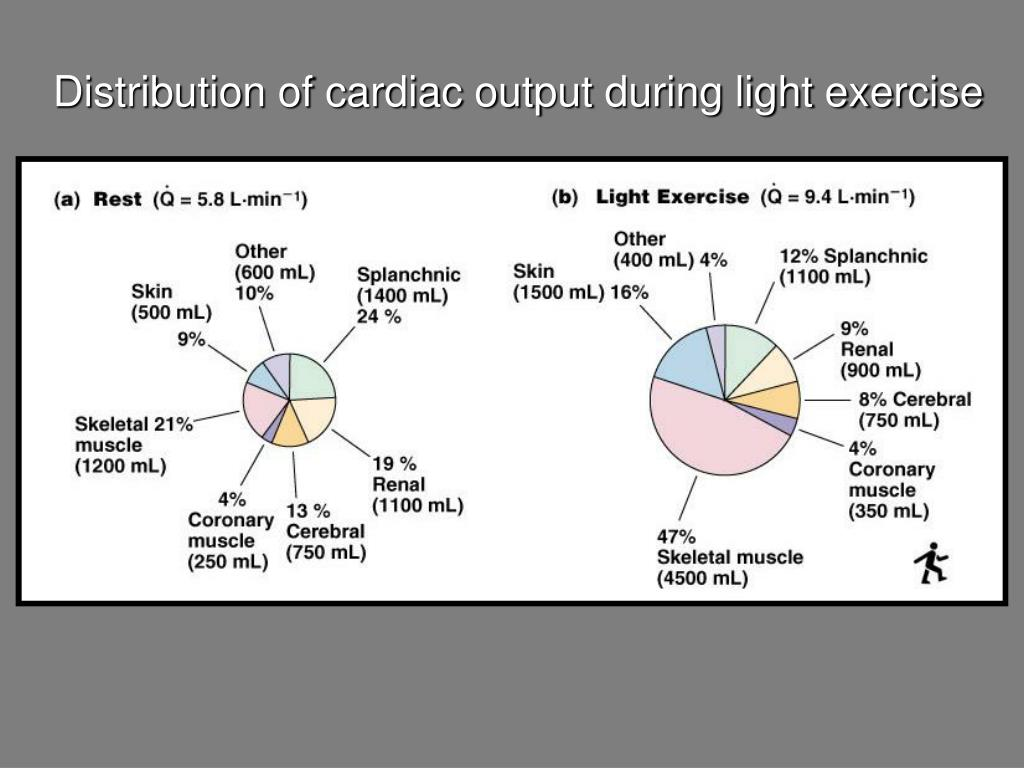 Distribution of cardiac output during light exercise