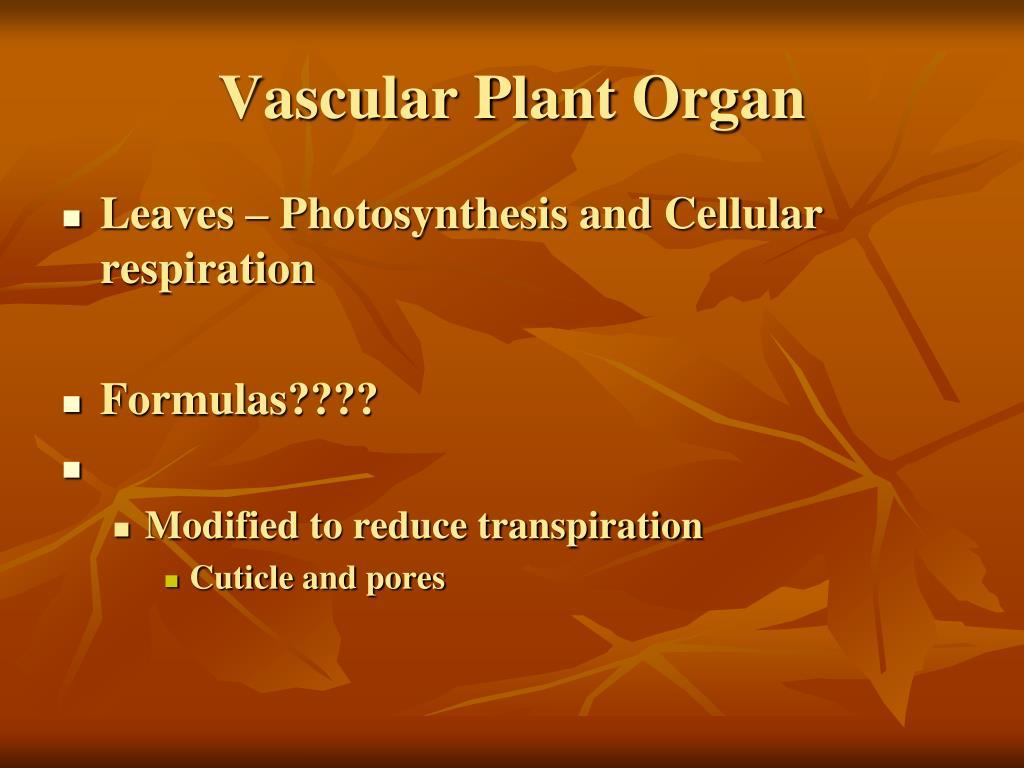 Vascular Plant Organ