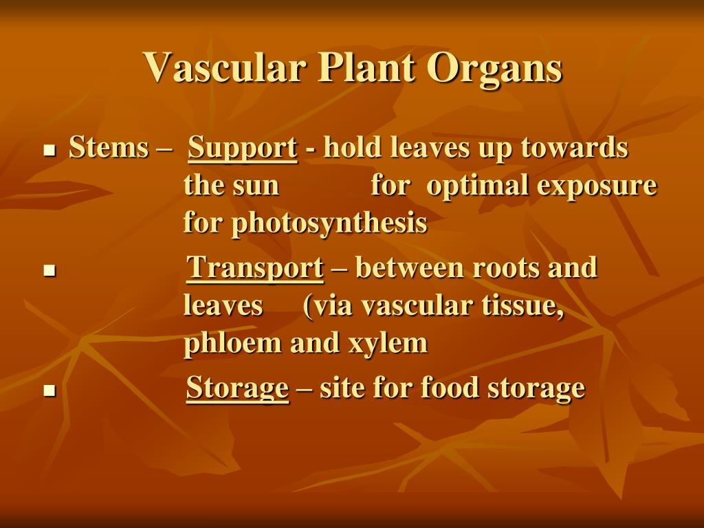 Vascular Plant Organs