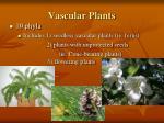 vascular plants13
