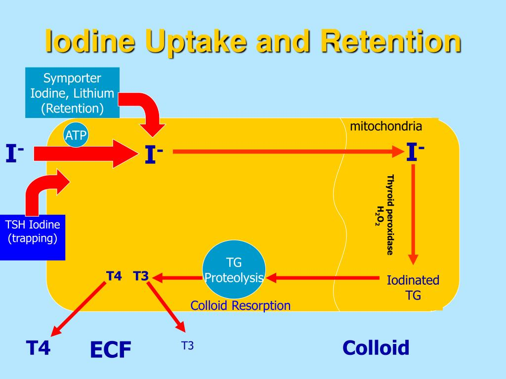 Iodine Uptake and Retention