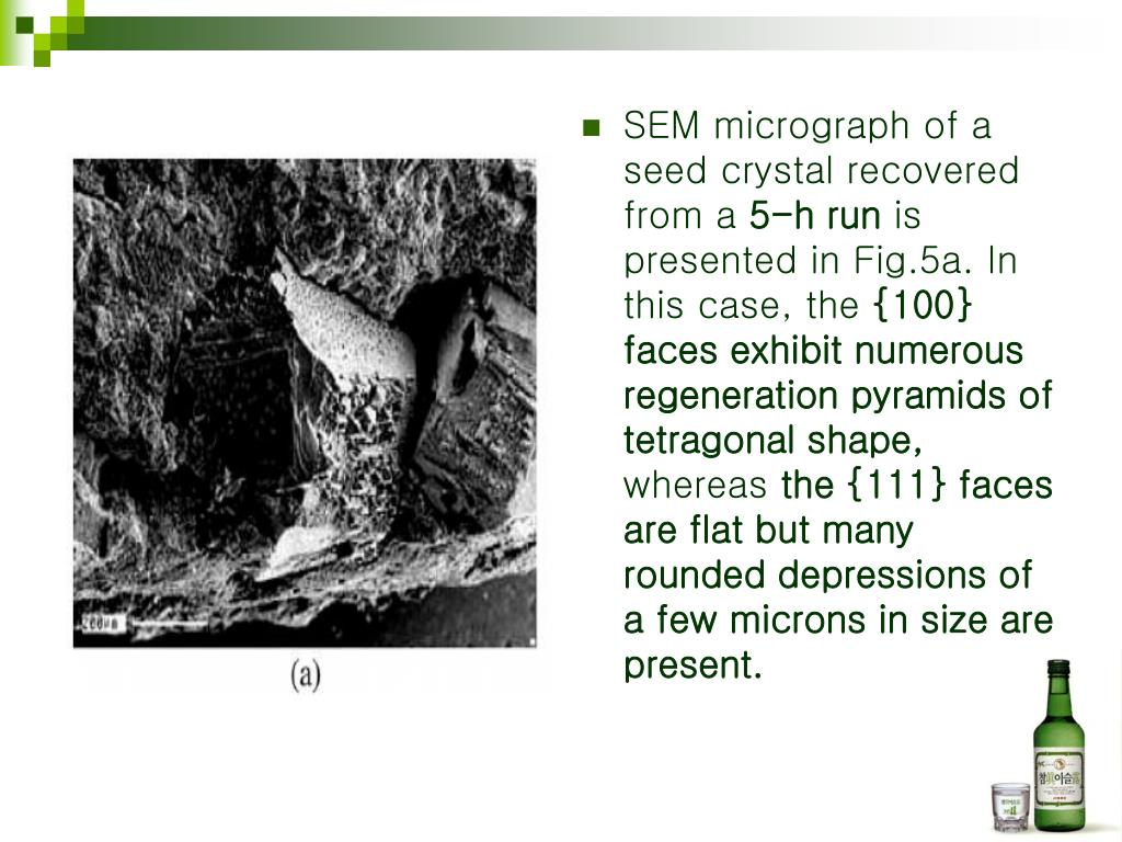 SEM micrograph of a seed crystal recovered from a
