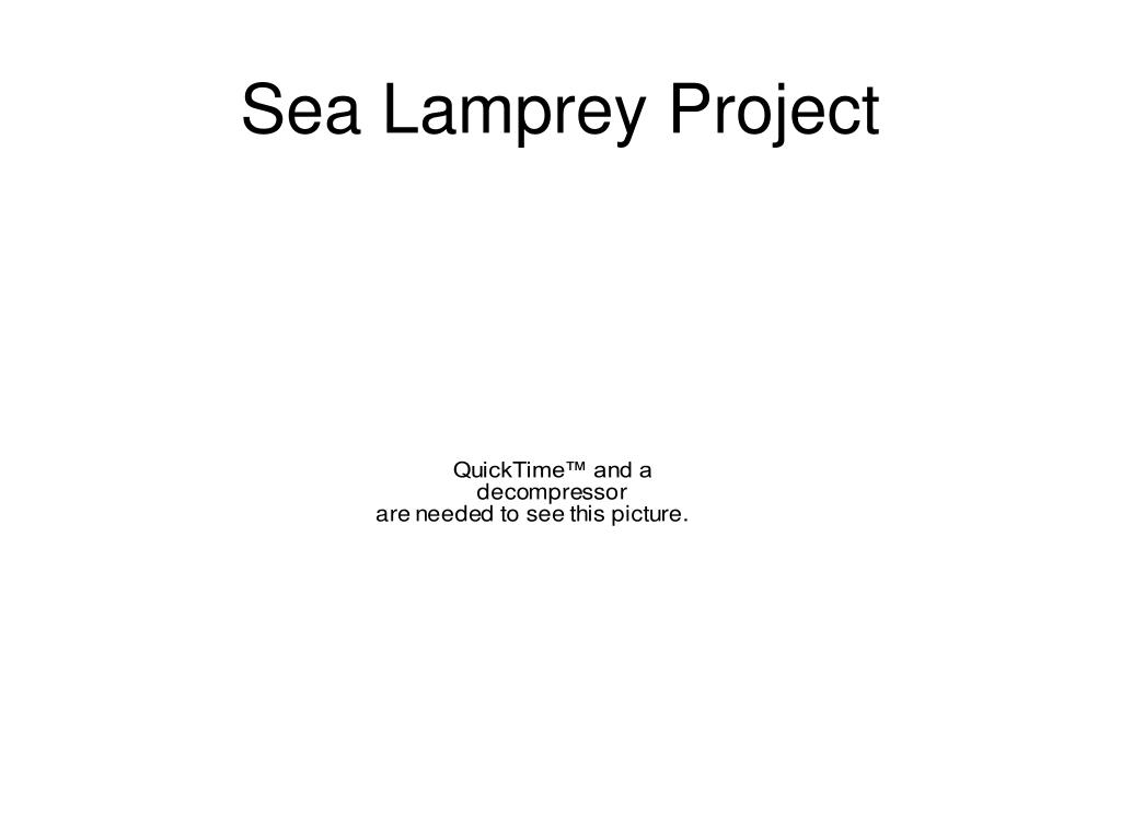 Sea Lamprey Project