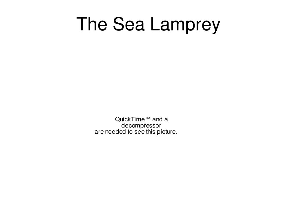 The Sea Lamprey