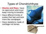 types of chondrichthyes