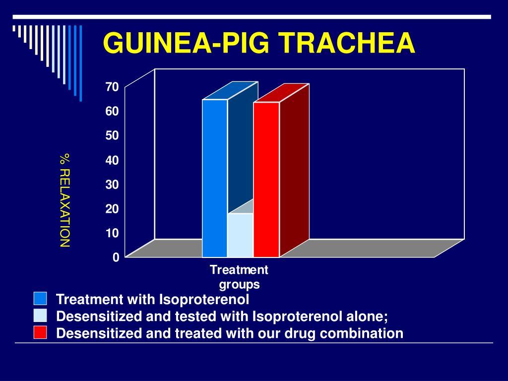 GUINEA-PIG TRACHEA