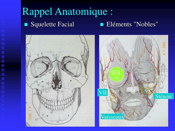Squelette Facial