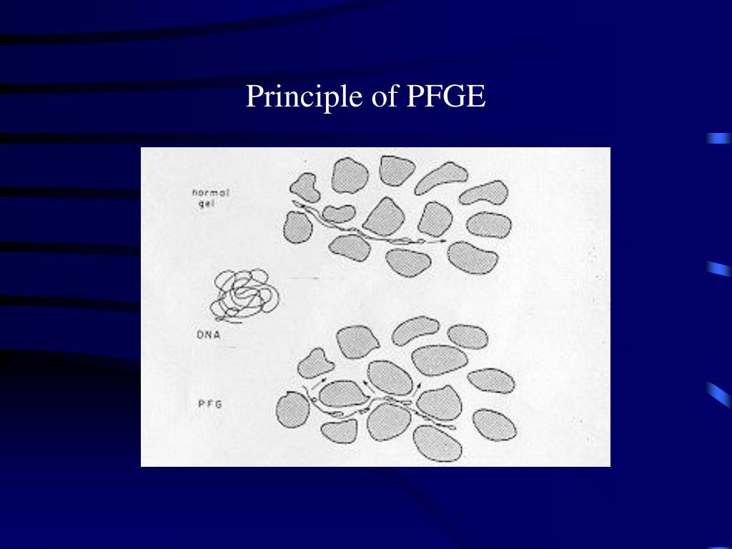 Principle of PFGE