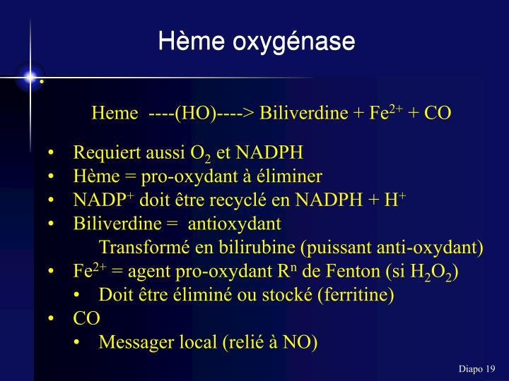 Hème oxygénase