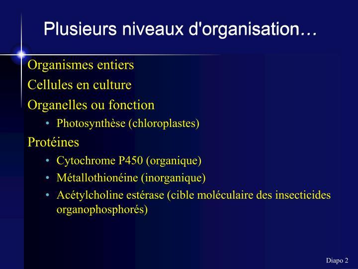 Plusieurs niveaux d'organisation…