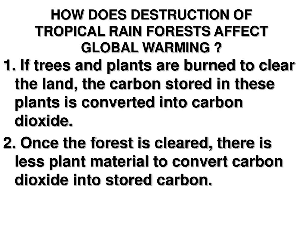 HOW DOES DESTRUCTION OF TROPICAL RAIN FORESTS AFFECT GLOBAL WARMING ?