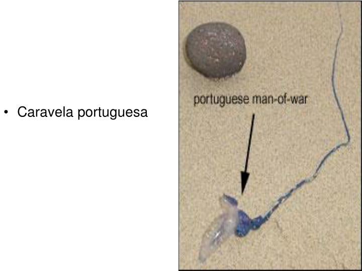 Caravela portuguesa